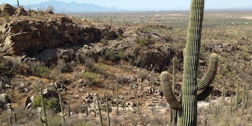 20140708 Saguaro